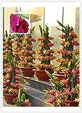 Original Pack, 15 semi / pack, Pitaya rosso all'interno Rosso esterno, dolce Dragon Fruit, Pitaya Cactus, molto delizioso