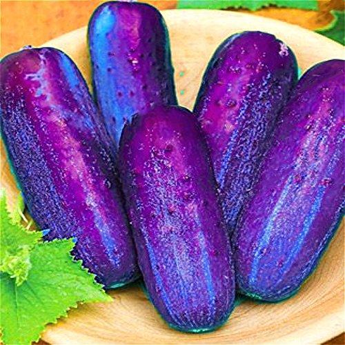 EgBert 100 Pz/Pacco Semi di Cetriolo Viola Giardino Fattoria Piante Vegetali Semi