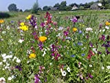 Blumenwiese -1001 Nacht- Blütenzauber Blumenmischung Blumensaat Sommerblumenmischung