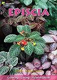 Episcia