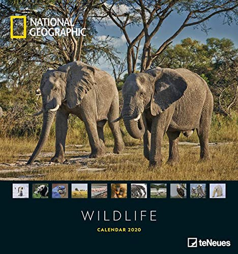 National Geographic Wildlife 2020 -