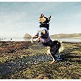 Hunde Kühlweste Motivation Cooling Vest von Hurtta Hellblau - L