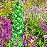 100pcs/bag verschiedene Farben von Rocket-Rittersporn Samen Consolida ajacis Delphinium Blumen vergossen Bonsai DIY Hausgarten 2