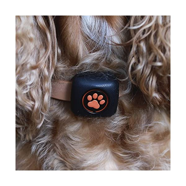 PitPat Dog Activity Monitor and Fitness Tracker - Lightweight and waterproof with no recharging or subscription (latest version, as seen on television) 6