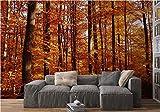 beneart® Fototapete Herbst-Wald rot - 350 x 250 cm - Wandbild bunt XXL - Home Deko - Tapete - Wand Deko - viele verschiedene Motive
