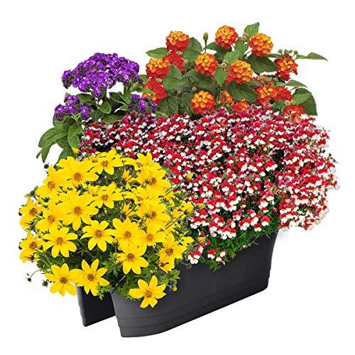 Qulista Samenhaus - 50pcs Rarität Sommerblumen-Sortiment Flotte Biene | Bienen- und schmetterlingsfreundlich Blumensamen Winterhart mehrjährig Balkonpflanzen Balkonkasten