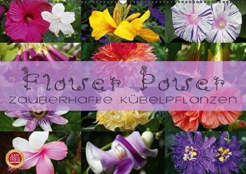 flower-power-zauberhafte-kubelpflanzen-wandkalender-2016-din-a2-quer-erleben-sie-12-zauberhafte-kube