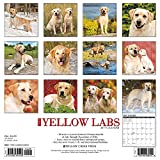 Image de Just Yellow Labs 2017 Calendar