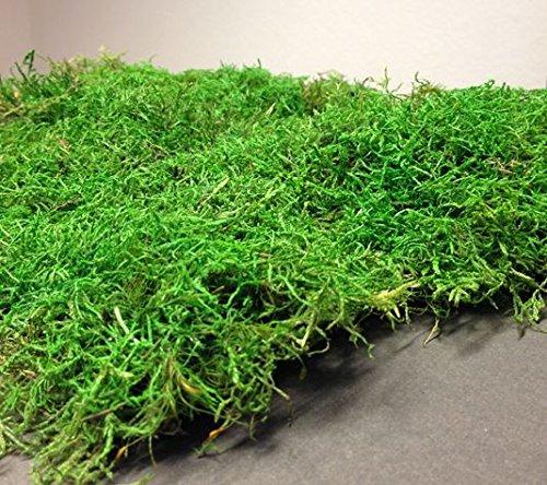 Moos 1 Lage Natur Moosmatten, Deko Plattenmoos, Flachmoos, Moosplatten zur Dekoration mit Moss; Dekomoos für Floristen