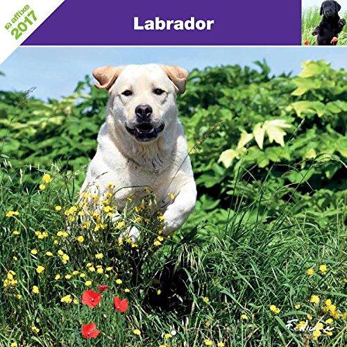 Labrador 2017–Calendar affixe-
