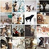 Flecken durch Haustiere & Geruchsentferner – Mit fortgeschrittener Enzym-Reinigungs-Formel – Bestens um alte und neue Flecken durch Haustiere (Katzen und Hunde) zu entfernen – Sicher auf Teppich, Holz, Fliesen und mehr – 32 Oz – TriNova - 6