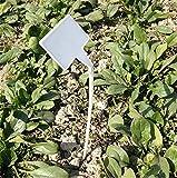 KINGLAKE 50 Stk Plastik Pflanzenschilder Wetterfest Gebogener T-Typ, Stecketiketten Pflanzenstecker Weiß, Etiketten Garten Kunststoff...