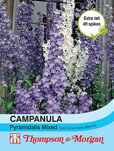 Thompson & Morgan Blumen Campanula hundswurz gemischt 700 Samen