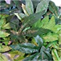 Reptile Vivarium Jungle Silk Plant Decor Abuliton Large by Reptipet