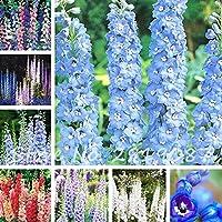 Mixto: Semillas de flores trepadoras Delphinium Semillas de flores Bifurcación Larkspur Salmon King Familia Jardín Decoración Flor 100 piezas