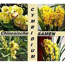 20x Rareza China Cymbidium Semillas Planta Jardín Plantas Habitación Neu #222