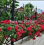 100 rojas rosales trepadores Semillas, de la herencia, magnífico, jardín de flores de bricolaje en casa, el patio olla