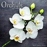 Kalender 2018 Orchideen - Orchids mit kostenloser Weihnachtskarte