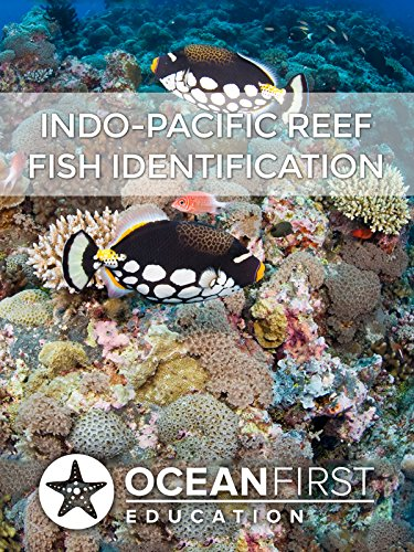 Reef Fish Identification Ebook