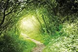 1art1 55528 Wälder - Grüner Waldweg, Into The Light Selbstklebende Fototapete Poster-Tapete 180 x 120 cm