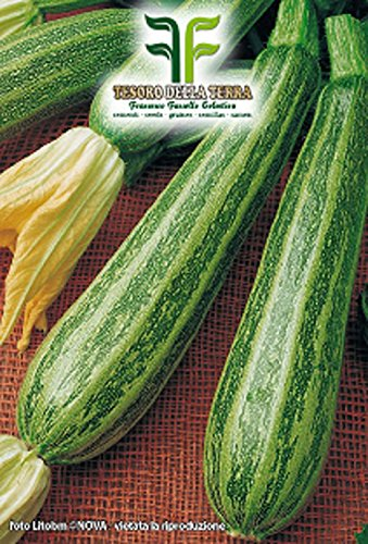 45 aprox – Pugliese Gestreifte Zucchinisamen – Cucurbita Pepo In Originalverpackung Made in Italy – apulische gestreifte Zucchini