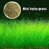 Daxibb Pflanzensamen Wasser Wasser Gras Aquarium Aquarium Decor Garten Vordergrund Pflanze Mini Hariy Gras