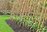 Schmales Bambusrohr Tonkinstäbe Bambusstäbe Rankhilfe - verschiedene Größen - 10er Pack (180cm x Ø 18-20 mm)
