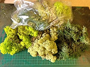 Mixed Green Model Scenic Lichen - Approx 60 grams