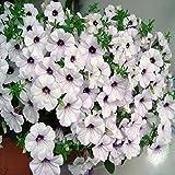 Doubleer Semi di Fiore Petunia Resistente al Freddo Facile da Germogliare Semi di Piante in Vaso 100PZ