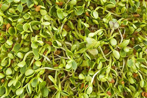 Germination des graines - radis - 100 g - 8500 graines