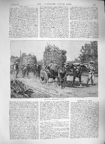 Price comparison product image Old Original Antique Victorian Print 1889 Conveying Farm Produce Chile South America 271P195