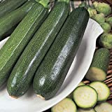 AGROBITS Courgte Verde - 15 * Courgte / Marrow * vegable vedere