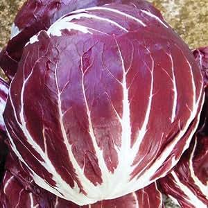 Radicchio Palla Rossa 3 Seeds