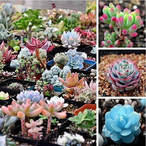 Gartenpflanze Blumen 50 Stück weiße Jasminsamen, duftende Pflanze arabisches Jasmin Blumensamen Gartenbonsai Pflanze Bonsai Seed