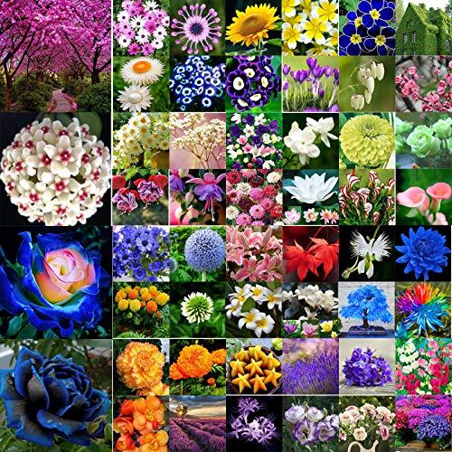 Go Garden 25pc Lemo Hot Pepper Graines: Variété mixtes rares colorés Graines de fleurs de fruits jardin Bonsai Plantes Lot Nouveaux