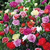 #4: Mix Carnation Flower Seeds for Home and Balcony Gardening with Free 100 Gm Agropeat (Plant Growth Booster) washed and treated Peat provides complete nutritional supplement and improves soil health for sustainable growth of crop plants.