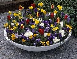 Amazon.de Pflanzenservice Sortiment 10 - 67 Blumenzwiebel Blütenwiese, Tulpen +Narzissen + Krokusse, Blumenzwiebeln, Winterhart