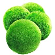 4 LUFFY Marimo Moss Balls - Aesthetically Beautiful & Create Healthy Environment - Eco-Friendly, Low Maintenance & Curbs Algae Growth - Shrimps & Snails Love Them