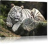Weisser Tiger, USA Bild auf Leinwand, XXL riesige Bilder fertig gerahmt mit Keilrahmen. Kunstdruck auf Wandbild mit Rahmen. Günstiger als Gemälde oder Ölbild, kein Poster oder Plakat, Format:60x40 cm
