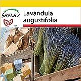 SAFLAX - Anzucht Set - Heilpflanzen - Echter Lavendel - 150 Samen - Lavandula angustifolia