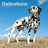 Dalmatians - Dalmatiner 2019 - 18-Monatskalender mit freier DogDays-App (Wall-Kalender)