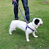 #6: Pets Empire Dog Design Pop Art Dogs Step-In Dog Harness and Leash, Small-1.5 cm Wide and fits Chest Circumference of 9 to 16