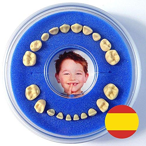 Cajita para Dientes de Leche --- Firsty Round --- (Azul, Chico) ABF con texto en Espagnol