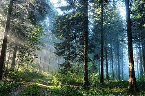 Startonight Cuadro sobre Lienzo Camino en el Bosque, Impresion en Calidad Fotografica Enmarcado y Listo Para Colgar Diseño Moderno Decoración Formato Grande 80 x 120 CM