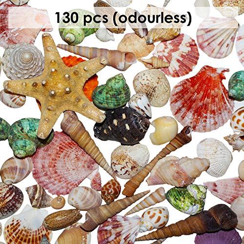 Conchiglie Per Decorazioni 130 Pezzi Decorazioni Casa Conchiglie Naturali Colorate Creazioni Candele Decorazione Matrimonio Tema Spiaggia