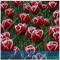ZLKING 1Pcs flores de los tulipanes de los bulbos en maceta Home jardín de plantas de cultivo hidropónico con bulbo no semillas de alta germinación Tasa Bonsai 2