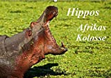 Hippos - Afrikas Kolosse (Wandkalender 2018 DIN A2 quer): Schwergewichte des schwarzen Kontinents (Monatskalender, 14 Seiten ) (CALVENDO Tiere) [Kalender] [Apr 01, 2017] Woyke, Wibke - Wibke Woyke