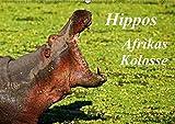 Hippos - Afrikas Kolosse (Wandkalender 2018 DIN A2 quer): Schwergewichte des schwarzen Kontinents (Monatskalender, 14 Seiten ) (CALVENDO Tiere) [Kalender] [Apr 01, 2017] Woyke, Wibke