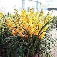 Orchidee Da Esterno.La Casa Delle Orchidee Ultimi 90 Giorni Piante Amazon It