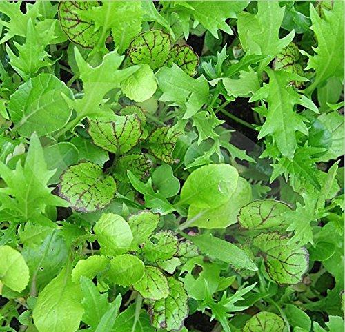 Nouveau jardin des plantes 100 graines Salad Oriental Feuille Mix Vegetable Seeds